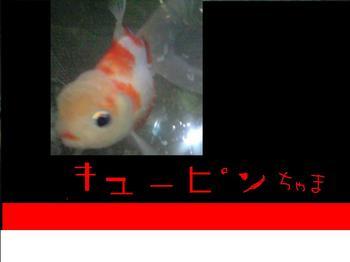 KYU-PINN.JPG
